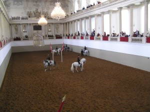 The horses and riders in action