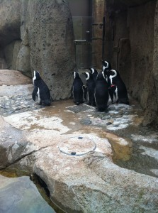And the penguins